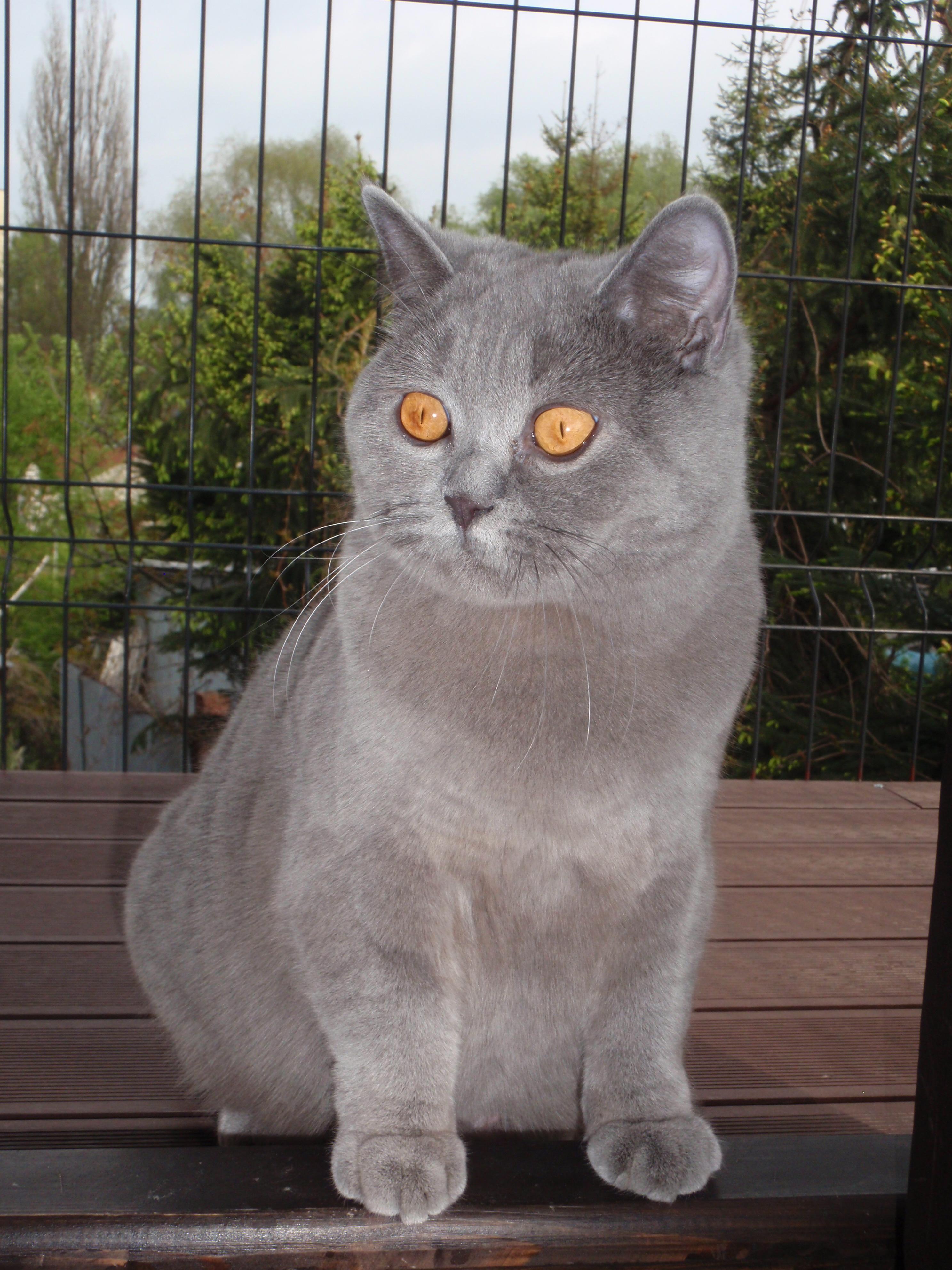 """""""Koty są istotami tajemniczymi, w ich umysłach jest więcej niż możemy sobie wyobrazić"""""""