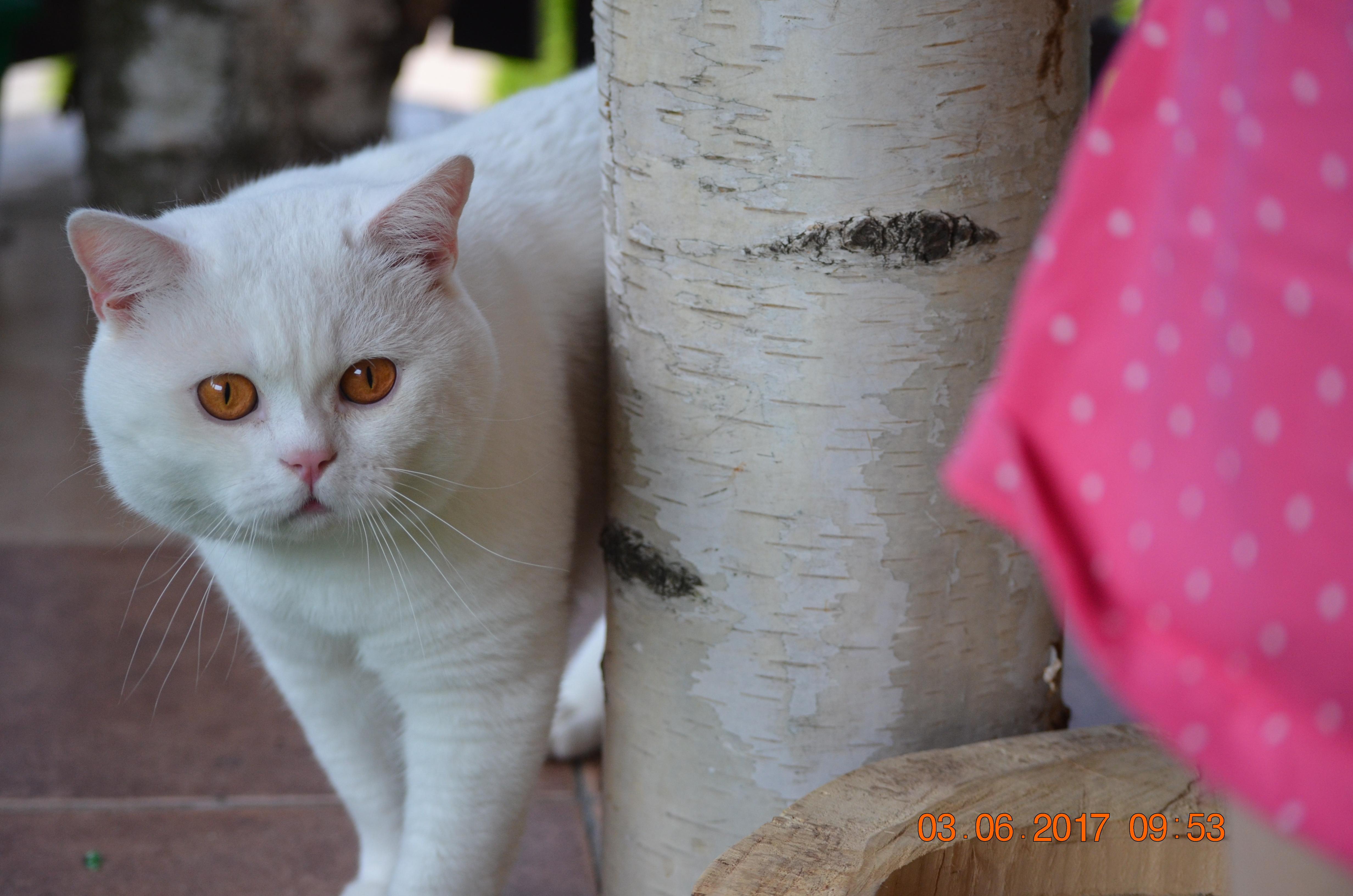 """""""Człowiek jest cywilizowany na tyle, na ile potrafi zrozumieć kota"""""""