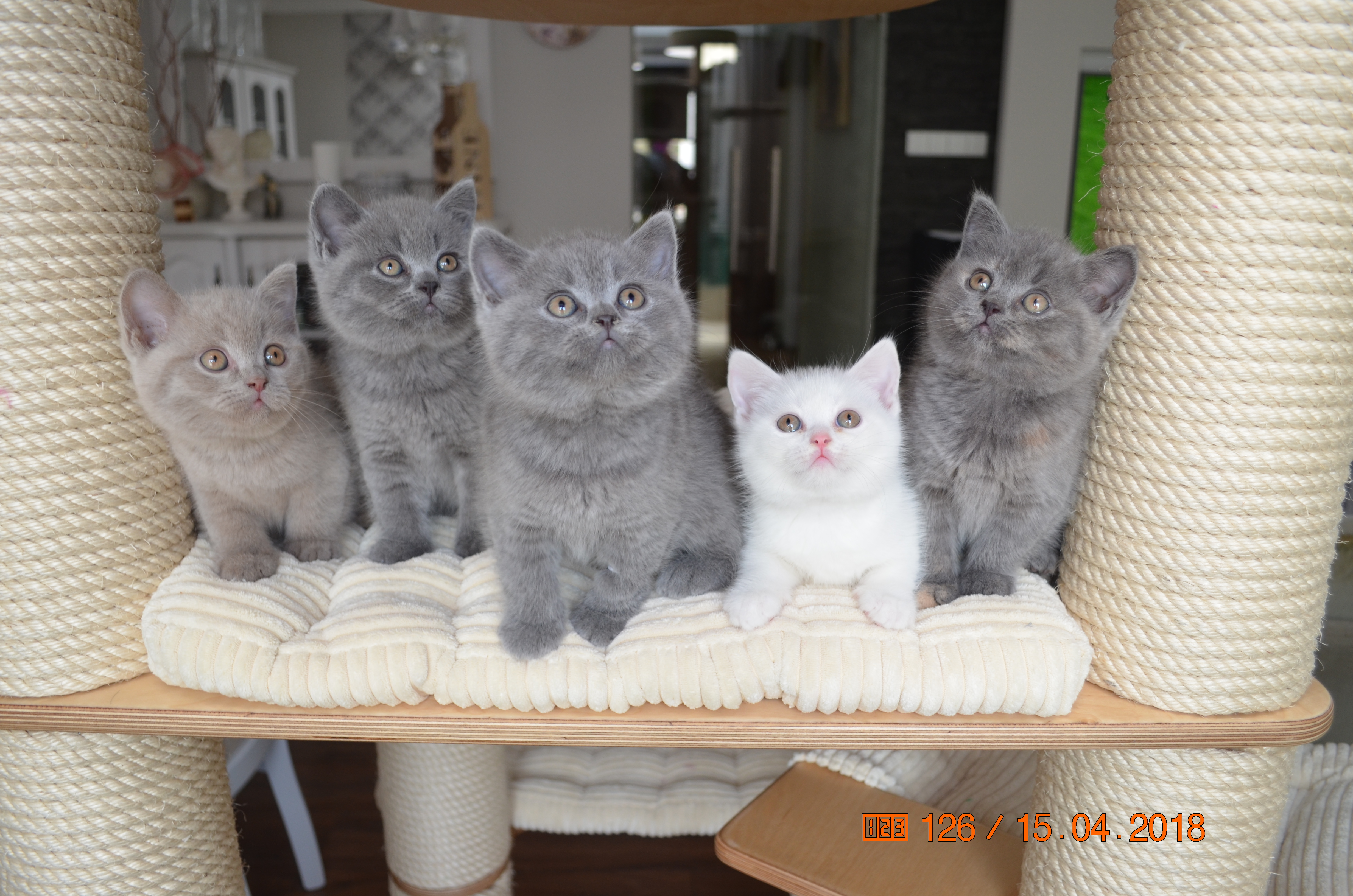 """Kto posiada kota, nie musi bać się samotności"""
